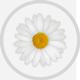 solen-papatya-80px